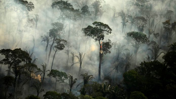 Amazon: Rainforests currently emit more carbon dioxide than they absorb