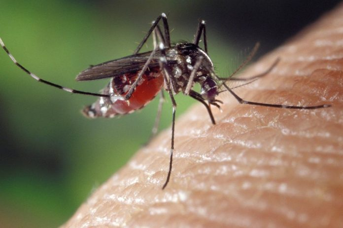 The tiger mosquito has taken root in the Doubs and Jura announces ARS Bourgogne-Franche-Comté