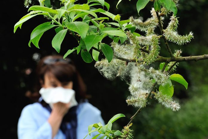 Pollen can increase virus transmission