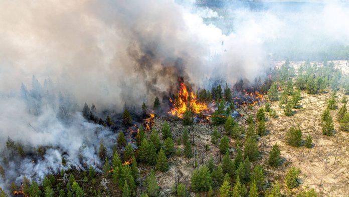 Russia: 3,000 firefighters battle dangerous forest fires in Siberia