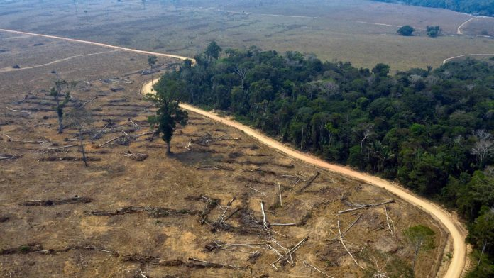 The Brazilian Amazon: The Hong Kong region that was cut off in May