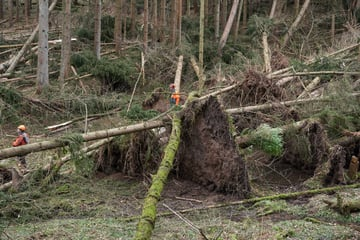 Forest damage after storms: The Minister of Forests is coming today