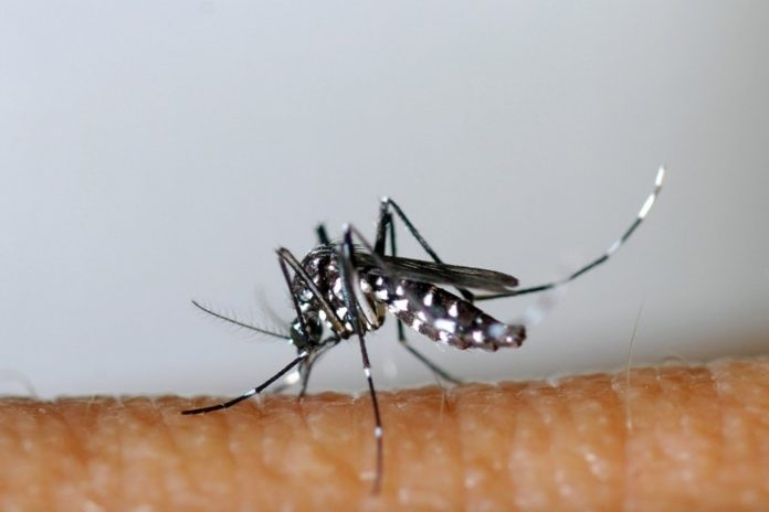 More than 8 billion people may be at risk of contracting dengue fever and malaria by 2080
