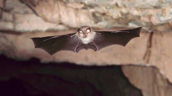 Researchers discover new coronavirus in British bats