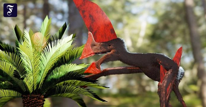 Complete fossil of reconstructed pterosaurs