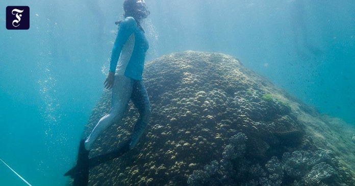 Discover more than 400 years of coral reefs in the Great Barrier Reef