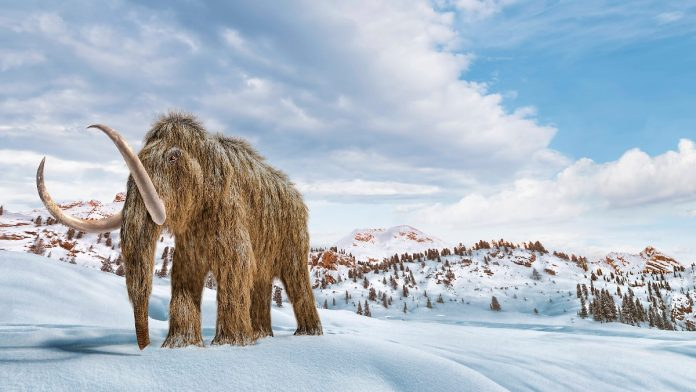 Funding for the project is available: Researchers are working on a mixture of elephant and mammoth