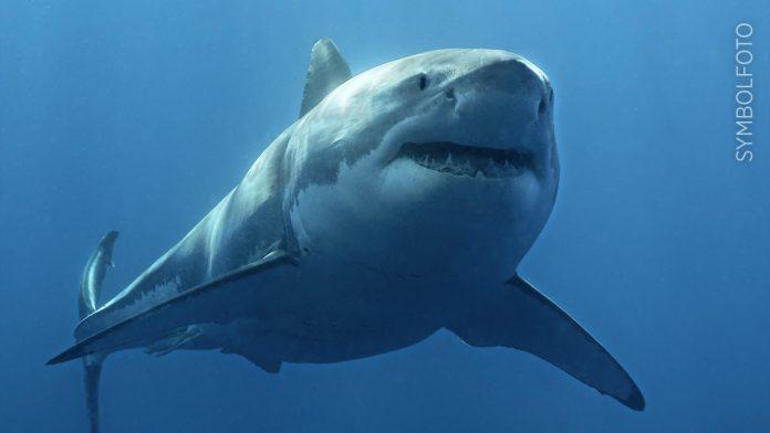Australia: Shark tracker stolen - man (48) sets off alarms - Overseas News